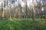 gražuolis miškas